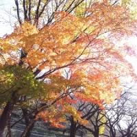 杉っ子倶楽部 善福寺公園